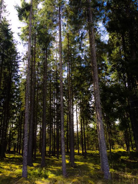 skogen_edited