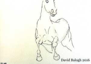 Horse 1 (2)